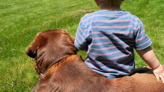 Bedre liv og helse med hund