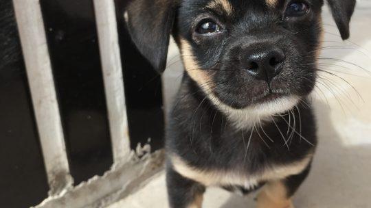Fordeler  og  ulemper  med  hundegård