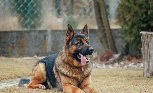 Hundens  eventyrlige  luktesans